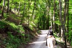 derstaudenhof_wanderreiten2